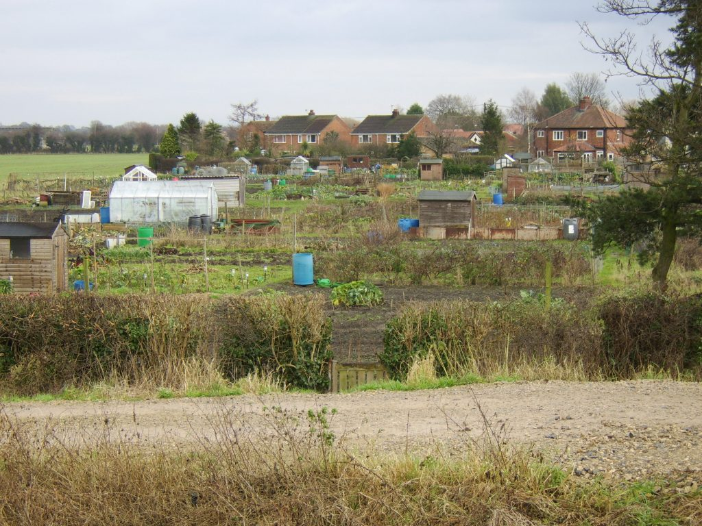 allotments.jpg